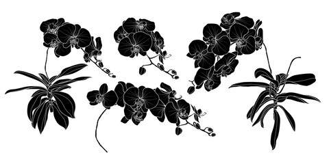 Set of isolated silhouette orchid branch set 3.