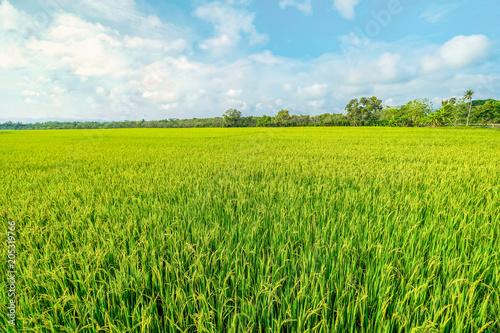 Fotografia a paddy field