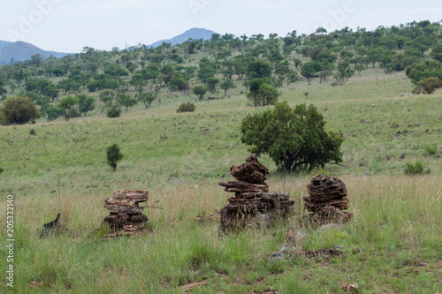 Staande foto Olijf Landscape of the African savanna with a pyramids of stones in the foreground