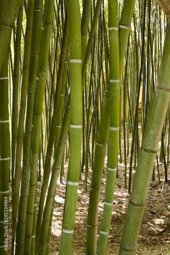 Tuinposter Bamboo Bamboo forest in Anduze France