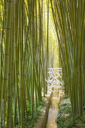 Foto op Plexiglas Bamboe Bamboo forest in Anduze France