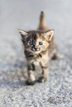 Young Cat, Havana, Cuba