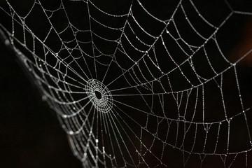 spiderweb silk details on black background