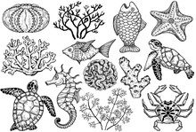 Sketch Of Sea Shells, Fish, Corals And Turtle. Hand Drawn Vector Illustration.