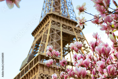 Poster de jardin Paris Blossoming magnolia against the background of the Eiffel Tower