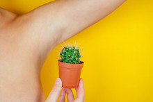 The Woman Is Holding A Green Cactus In A Brown Pot Near The Underarms. The Concept Of Depilation, Shugaring, Epilation And Removal Unwanted Hair On The Body