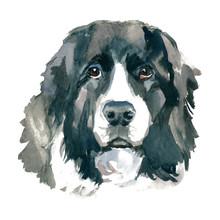 The Landseer Dog Portrait