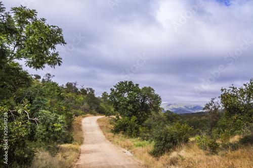Staande foto Afrika Safari scenery gravel road in Kruger National park, South Africa