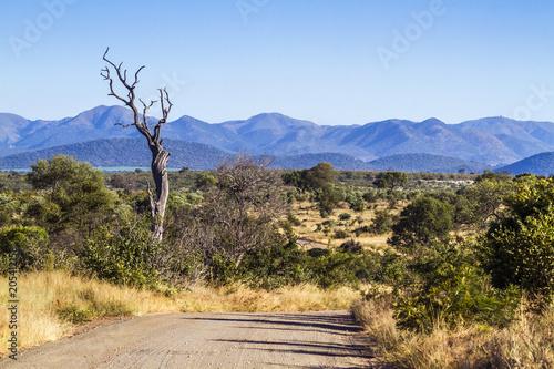 Staande foto Afrika Safari gravel scenery in Kruger National park, South Africa