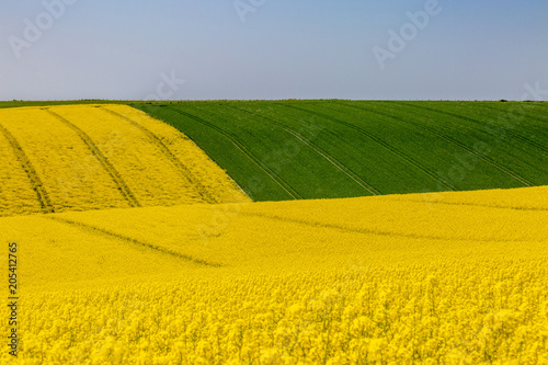 Foto op Canvas Oranje Vibrant South Downs Landscape