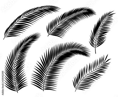 Obraz na plátně Palm Leaf Silhouettes