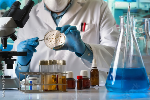 Fotografia  scientist hand cultivating petri dish whit inoculation loops in the laboratory /