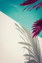 Purple Palm Leaves Against Tur...