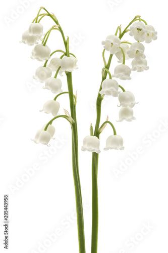 Photo Stands Lily of the valley White flower of lily of the valley, lat. Convallaria majalis, isolated on white