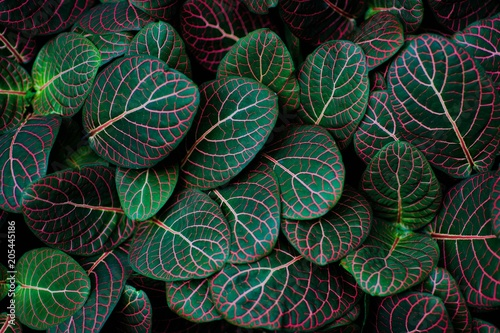 tropical green background, exotic green leaves, texture, pattern Poster