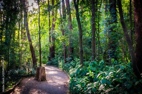 Caminho dentro do parque