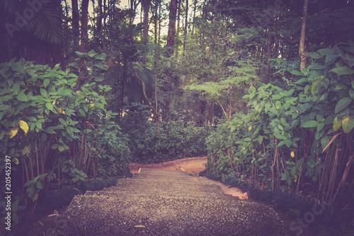 Tuinposter Weg in bos Parque em sp