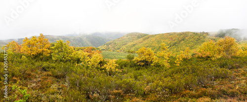 Foto op Plexiglas Honing Vista panorámica de paisaje de Otoño con Colinas y Bosques de Robles entre niebla y nubes bajas y brezos en primer plano