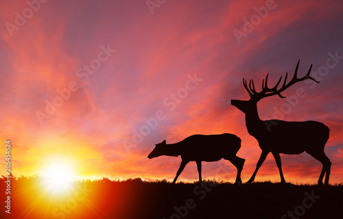 Fotobehang Jacht Wildlife Silhouette of Elks at Nature Sunset
