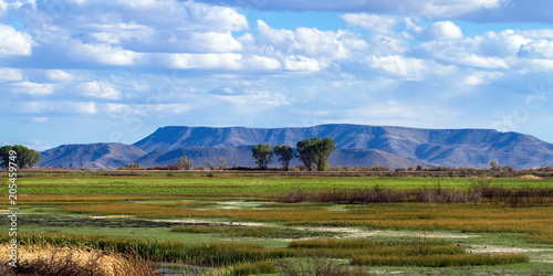 Fotografie, Obraz  The beautiful marsh in Alamosa National Wildlife Refuge at the edge of the Sangr