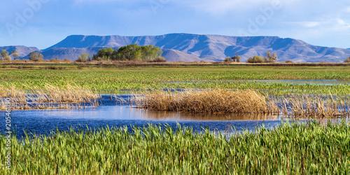 Fotografie, Obraz  The beautiful marsh in Alamosa National Wildlife Refuge at the edge of the Sangr