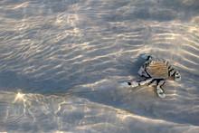 Hermit Crab On Sand Under A Sh...