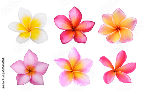 Photographie set of white frangipani (plumeria) flower isolated on white background