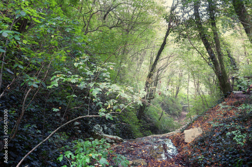 In de dag Olijf Осенний лес. Лесные тропы в осеннем лесу