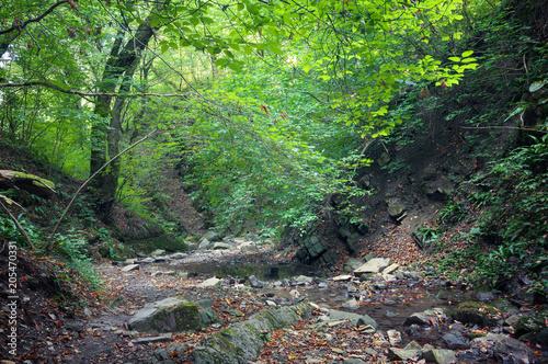 Staande foto Grijze traf. Осенний лес. Лесные тропы в осеннем лесу