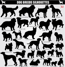Set Of Vector Silhouettes Of Dogs With Names