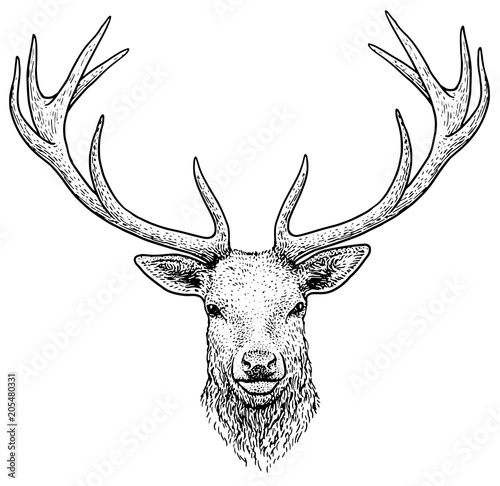 Foto op Plexiglas Kerstmis Deer head illustration, drawing, engraving, ink, line art, vector