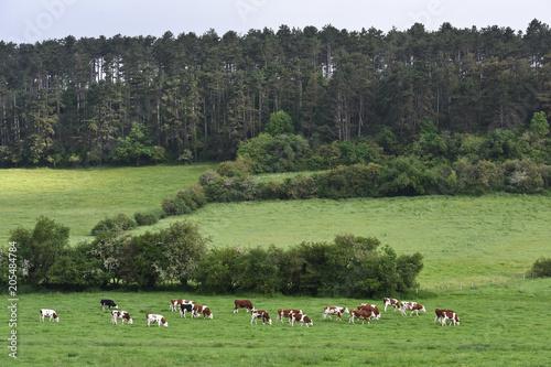Papiers peints Gris traffic Paysage Belgique Wallonie environnement elevage betail vache