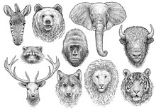 Animal Head Collection Illustr...