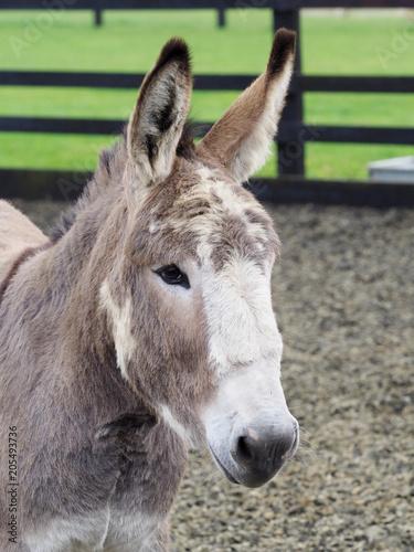 Deurstickers Ezel Donkey Headshot