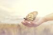 Leinwandbild Motiv sweet encounter between a human hand and a butterfly