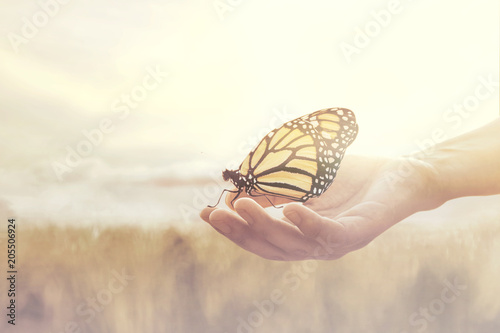 Fotografía sweet encounter between a human hand and a butterfly