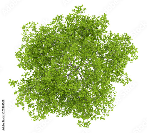 top view of cherry tree isolated on white background