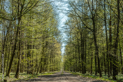 Tuinposter Weg in bos Droga leśna