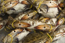 The Crabs In Market./The Crabs...