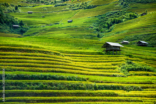 Staande foto Rijstvelden Beautiful landscape of rice field terraced at SAPA district Northwest Vietnam