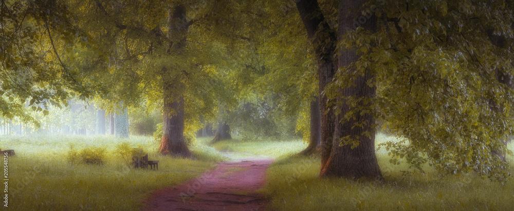 Fototapety, obrazy: magic forest
