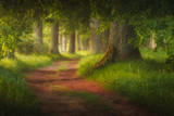 magic forest path