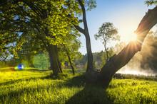 Perfect Summer Landscape On Gr...