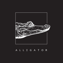 American Alligator (Alligator Mississippiensis) - Vector Image. White Illustration In Engraving Style Of Crocodilian Reptile Isolated On Black Background, Design Element For Logo Or Template.