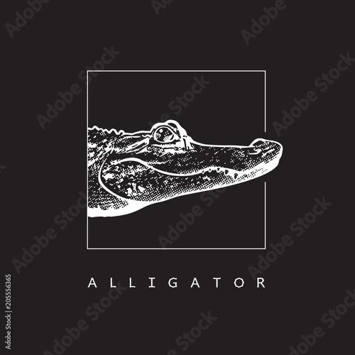 Fototapeta premium Aligator amerykański (Alligator mississippiensis) - grafika wektorowa. Biała ilustracja w stylu grawerowania krokodyla na białym tle na czarnym tle, element projektu logo lub szablonu.