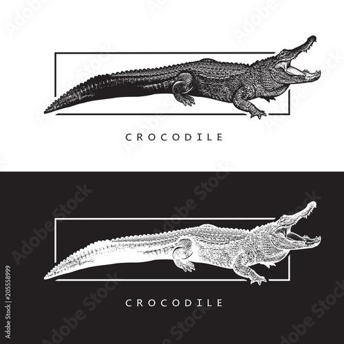 Fototapeta premium Grafika wektorowa aligatora amerykańskiego. Czarno-biała ilustracja krokodyla, logotyp, kliparty w stylu grawerowania, element projektu logo lub szablonu.