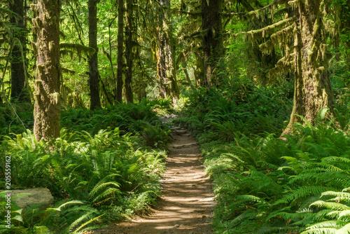 Trail through the Hoh Rainforest Canvas-taulu