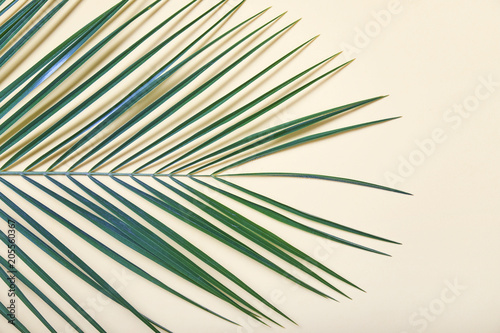 Tropical leaves on pastel background. Fototapeta