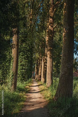 Fotobehang Weg in bos Pathway in the woods next to cultivated fields at the late afternoon light, next the village of Damme. A quiet and charming countryside old village near Bruges. Northwestern Belgium.