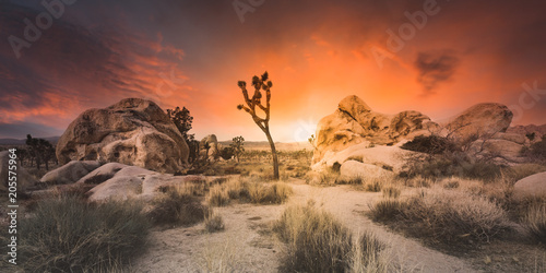 Wall Murals Deep brown Desert Sunset - Joshua Tree Boulders - Wide Angle Panoramic